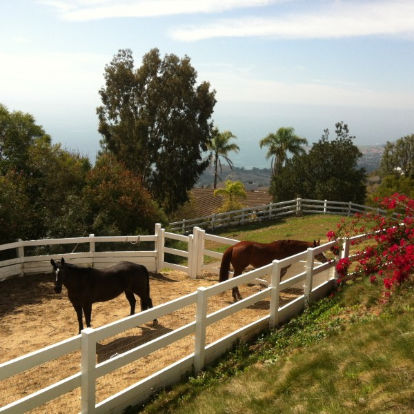 horse property in rolling hills