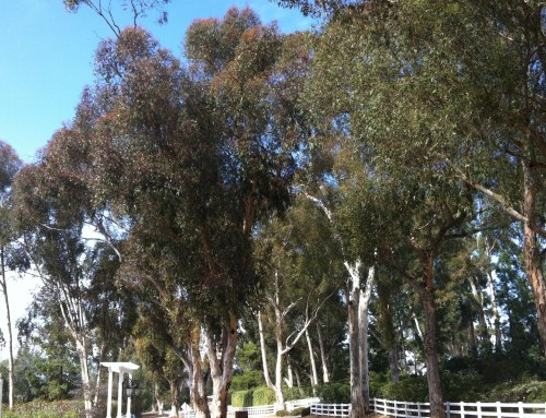 Palos Verdes Bridle and Hiking Trails–Rules and Regs